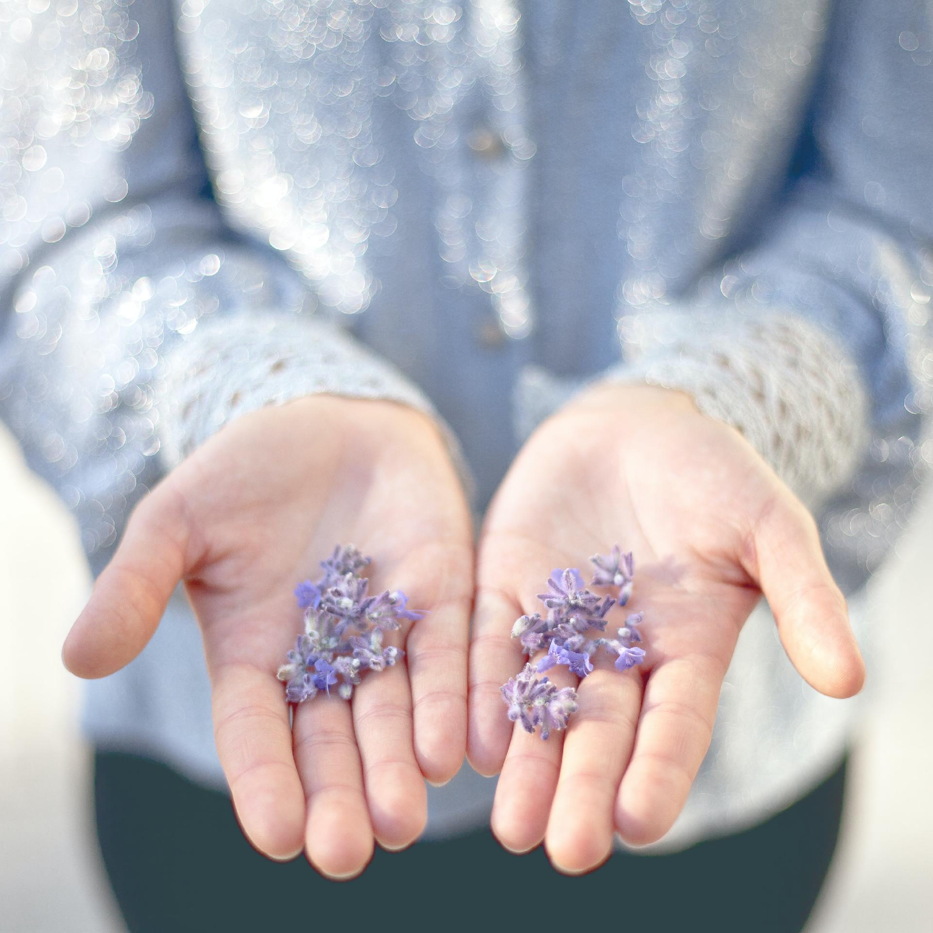 The Benefits of Lavender Oil